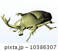 カブトムシ 10386307