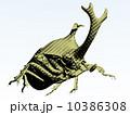 カブトムシ 10386308