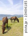 都井岬の馬 10404185