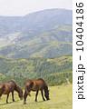 都井岬の馬 10404186
