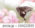種 スピーシーズ サマータイム 10422835