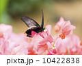 種 スピーシーズ サマータイム 10422838