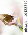 種 スピーシーズ サマータイム 10422840