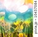 Flowers 10437084