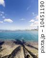 ヤシの木 海岸 湾岸の写真 10451190