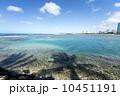 ヤシの木 海岸 湾岸の写真 10451191