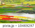 池 花 チューリップの写真 10469297