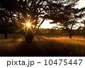 太陽 日 日ざしの写真 10475447