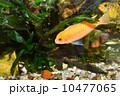 アクアリウム 水族園 水族館の写真 10477065