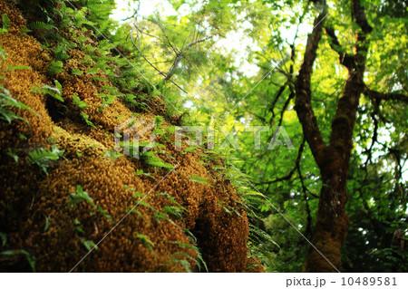 オレゴン洞窟 国定公園 02 コケに包まれた洞窟の入り口 10489581