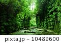 レッドウッド国立公園 04 シダ植物に覆われたファーンキャニオン  カリフォルニア 10489600