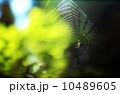 日光に照らされる蜘蛛と蜘蛛の巣 オレゴン 10489605