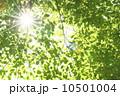 枝 日差し 太陽の写真 10501004