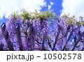 藤 10502578