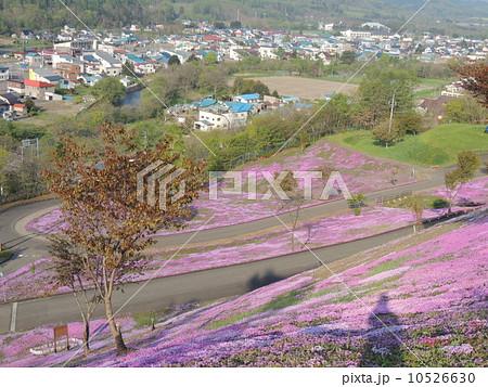 滝上公園 芝桜 10526630