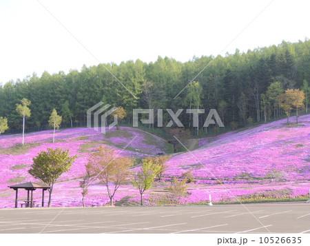 滝上公園 芝桜 10526635