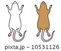 ハツカネズミ-腹面(白・茶) 10531126