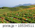 あわじ花さじき 春 花畑の写真 10534511