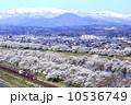 春 電車 桜並木の写真 10536749