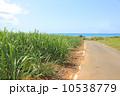さとうきび さとうきび畑 小浜島の写真 10538779