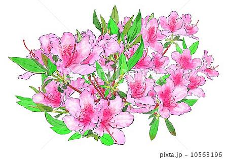 ツツジの花のイラスト素材 10563196 Pixta