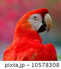 朱 インコ カラフルの写真 10578308