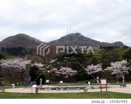 函館公園の桜 10582492