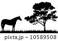 動物 バックグラウンド 背景のイラスト 10589508