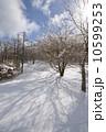雪原 雪景色 林の写真 10599253
