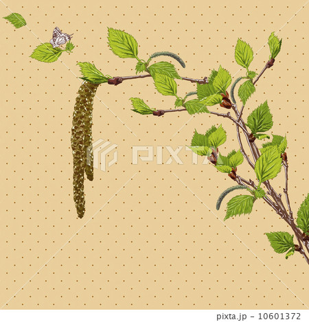 Vintage Card with Birch Twigs のイラスト素材 [10601372] - PIXTA