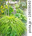 フウチソウのある和風の庭 10609040