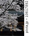 南禅寺の春 10617892