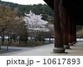 南禅寺の春 10617893
