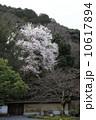 南禅寺の春 10617894
