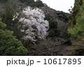 南禅寺の春 10617895