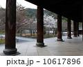 南禅寺の春 10617896