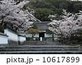 南禅寺の春 10617899