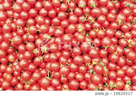 ミニトマト 10620317