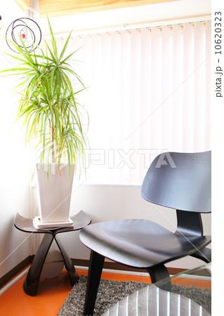 観葉植物 10620323