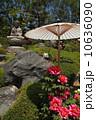 牡丹 庭石 牡丹の花の写真 10636090