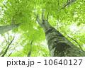 樹木 木 新緑の写真 10640127