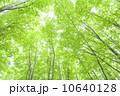 樹木 木 新緑の写真 10640128