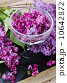 fresh lilac flowers in cup 10642872
