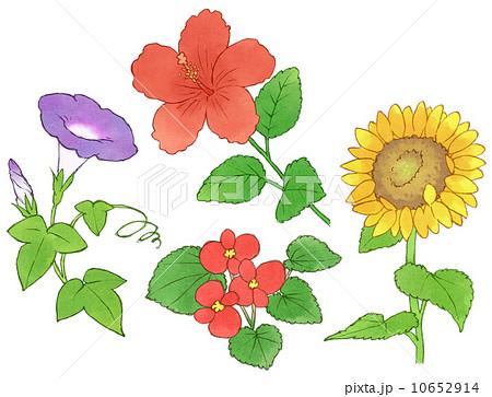 【第3回】色違いの花はどうしてできる? -アサガオの多彩な花色を決める遺伝子- < 一般向け情報 | 日本植物学会