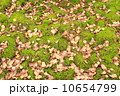 background of green moss and yellow leaves 10654799