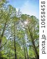 木立 木々 新緑の写真 10658458