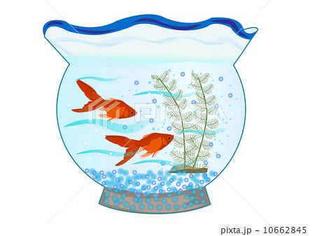 金魚鉢 10662845