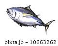 鮪 魚介類 食材のイラスト 10663262