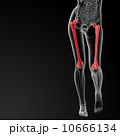ボディ 身体 体のイラスト 10666134