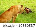Hunter and Prey 10680537